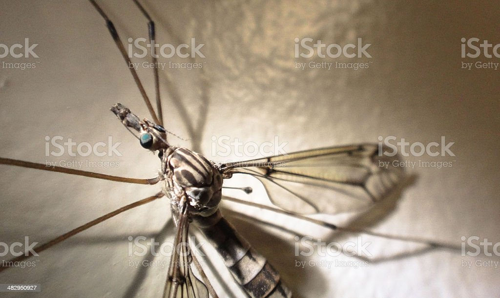 Mosquito on wall stock photo