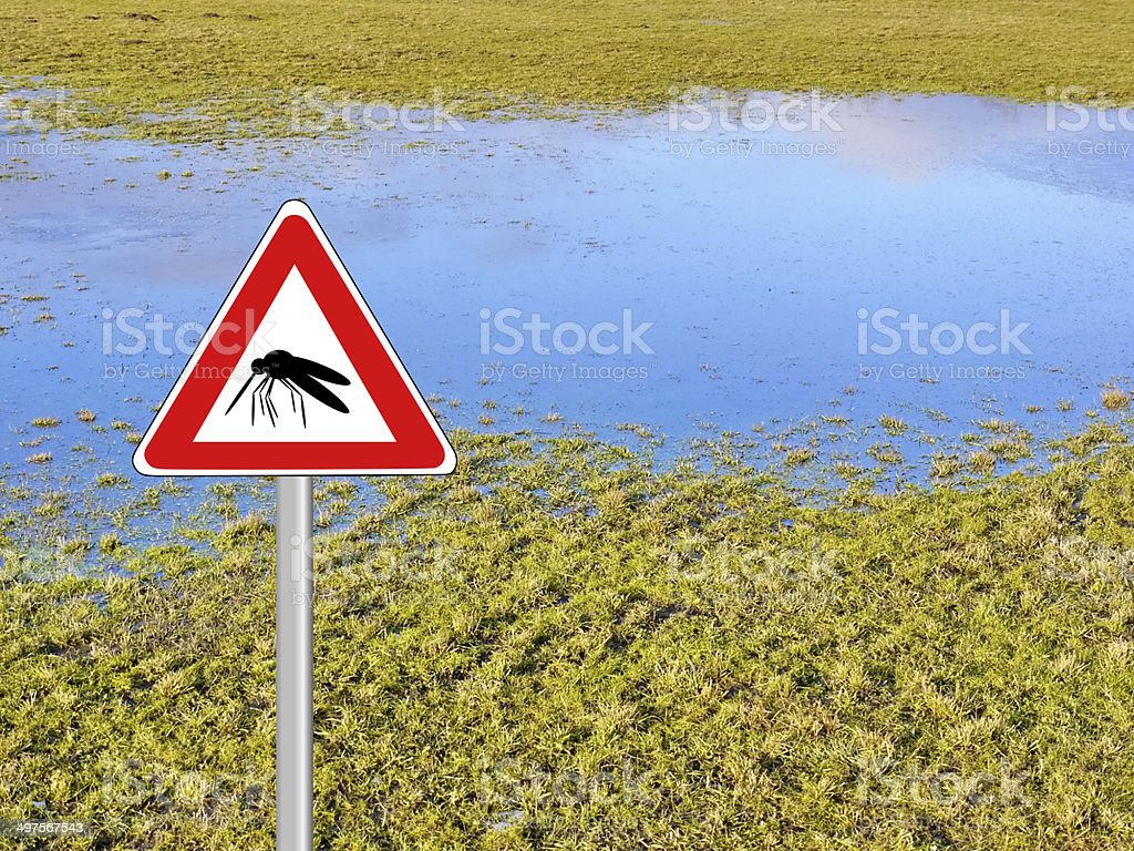 mosquito pest high water stock photo
