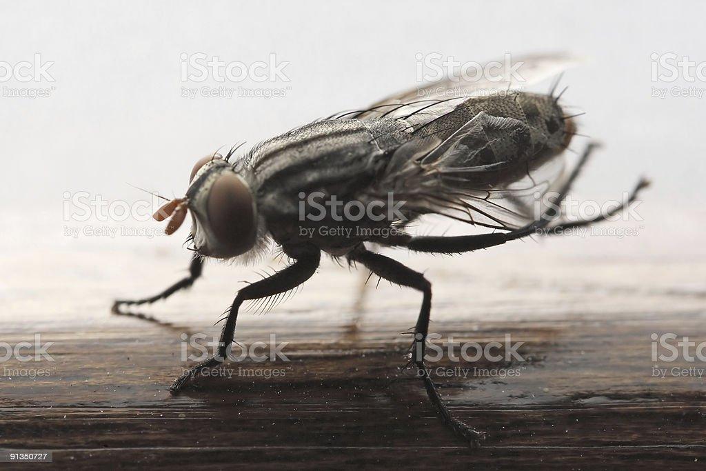 Mosquito stock photo - iStock Mosquito - 웹
