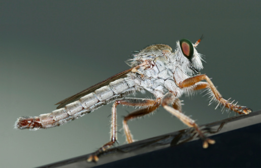 Mosquito Stock Photo - Download Image Now
