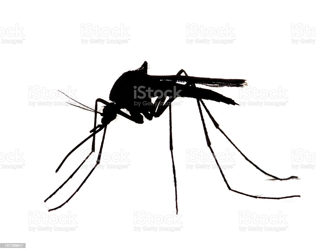 Mosquito Silhouette royalty-free stock photo