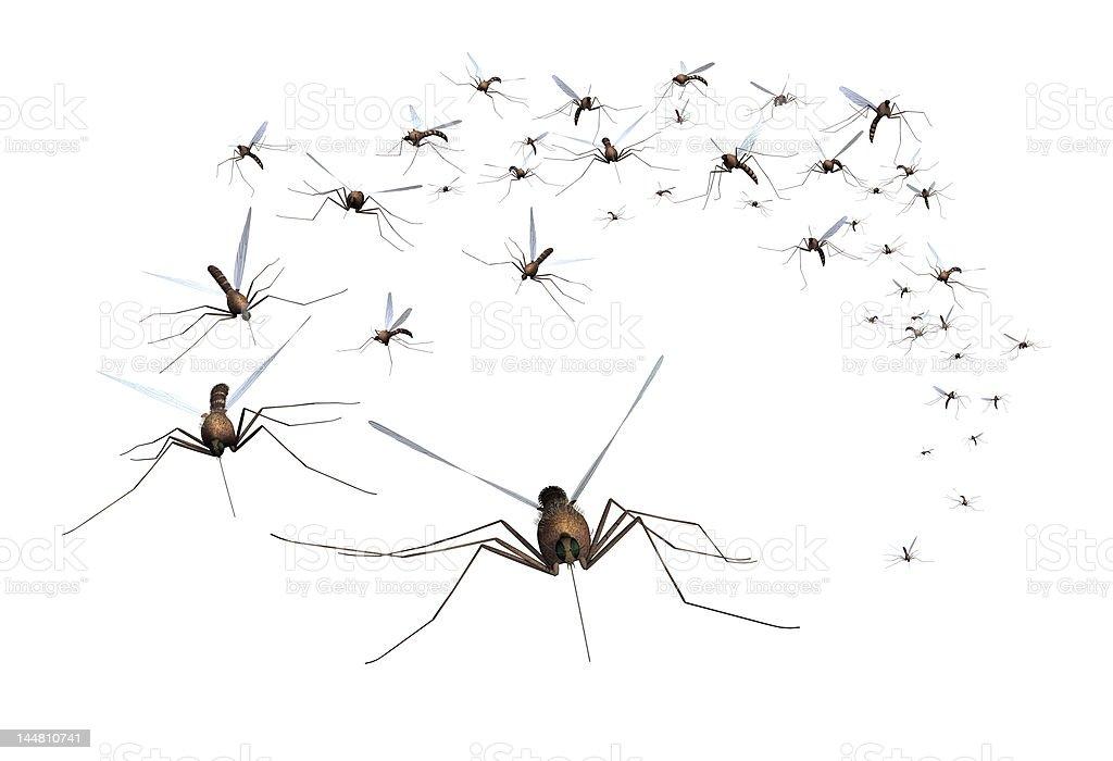 Mosquito Swarm stock photo