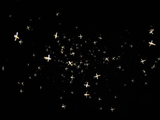 Mosquitos bei Nacht – Foto