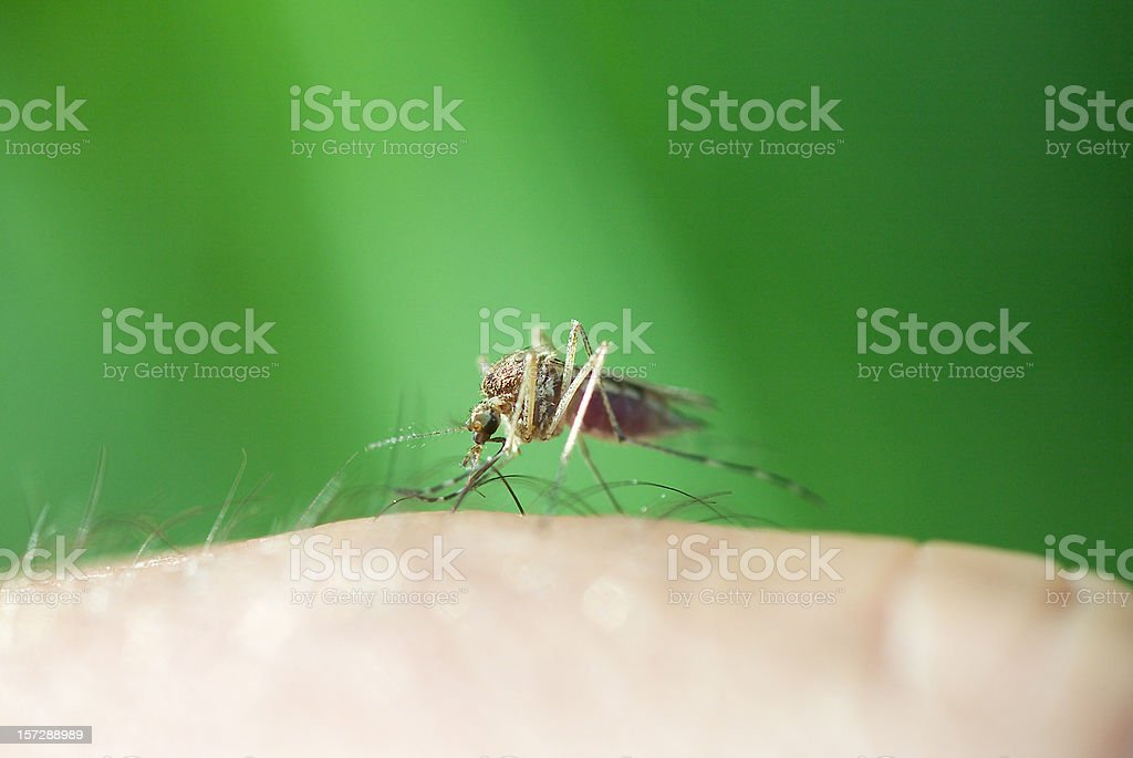 Mosquitos suck! stock photo