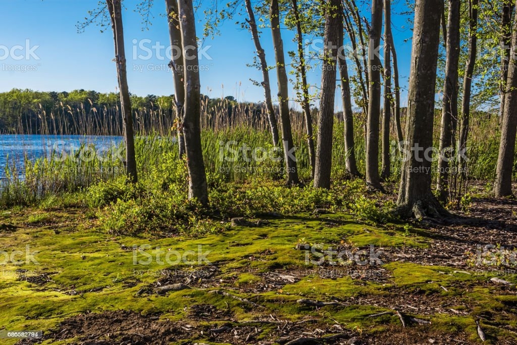 Moss Along the Shoreline royalty-free stock photo