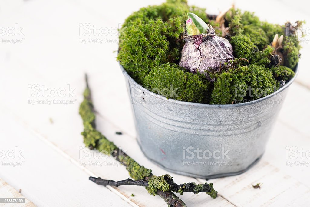 Moss and bulb flowers stock photo
