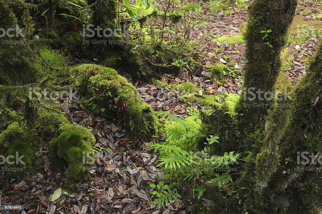 Moss and fern royalty-free stock photo