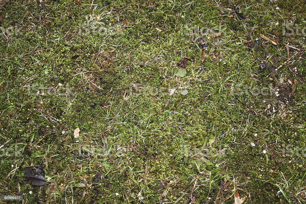 Moss and Grass royalty-free stock photo