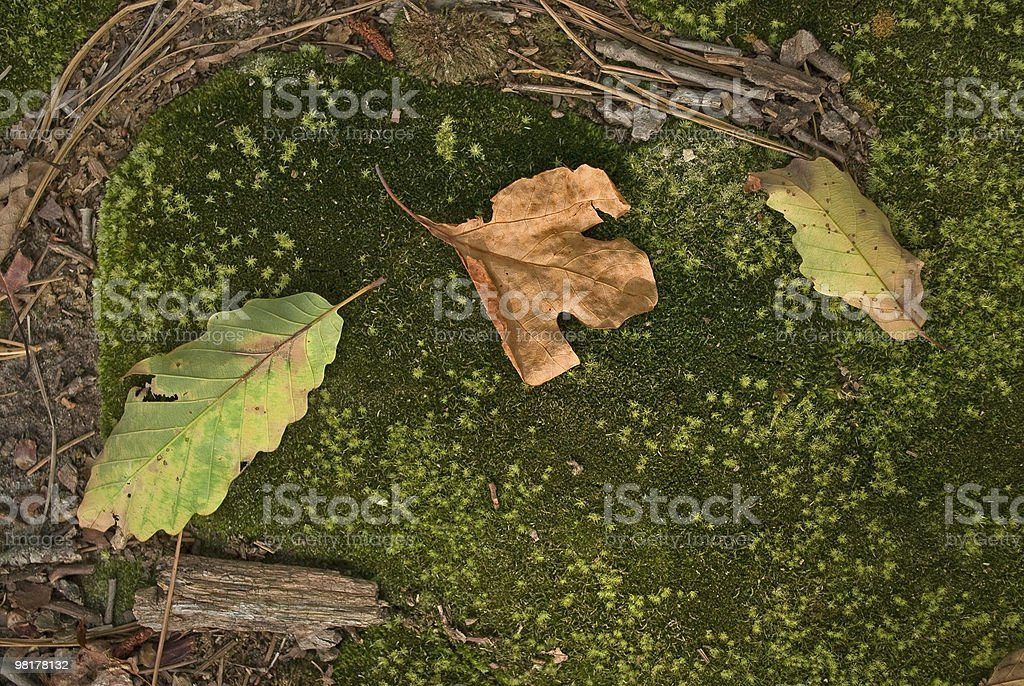 Moss and Leaf royalty-free stock photo