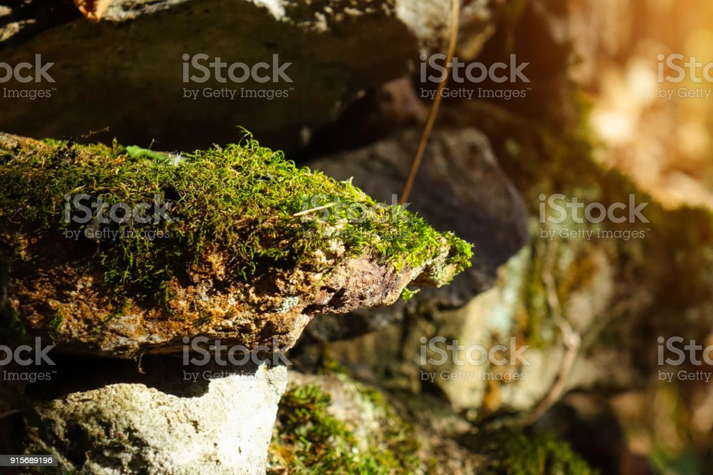 Moss and lichens on the rock - foto stock