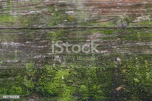 Moss and mold affect a wood panel.