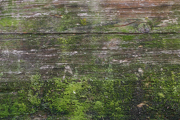 moss and mold - moss stock pictures, royalty-free photos & images