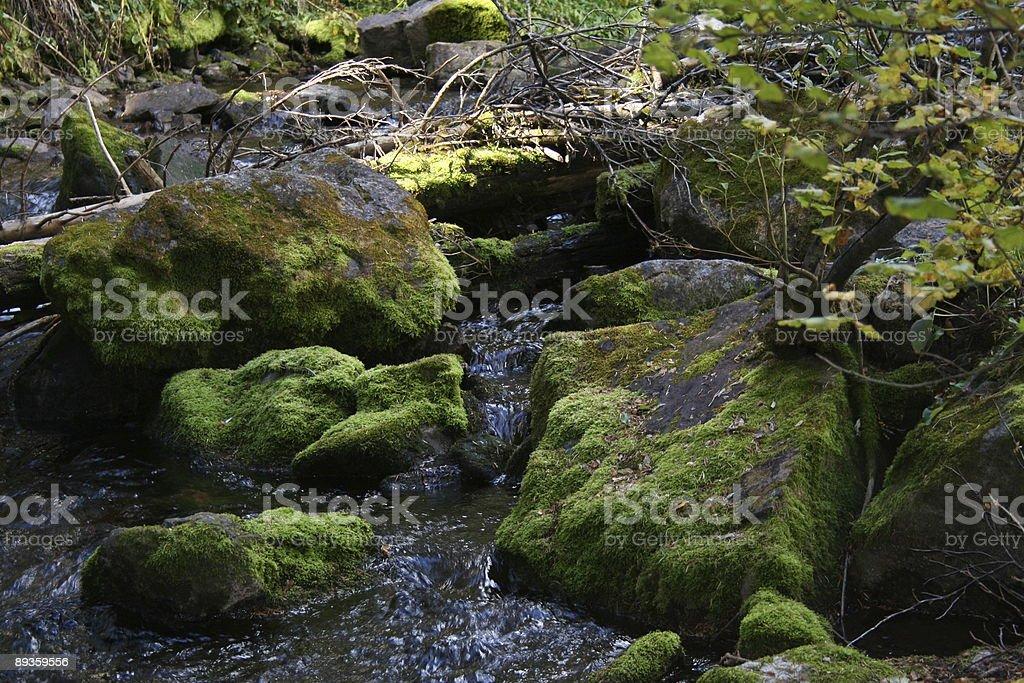 moss i rock zbiór zdjęć royalty-free