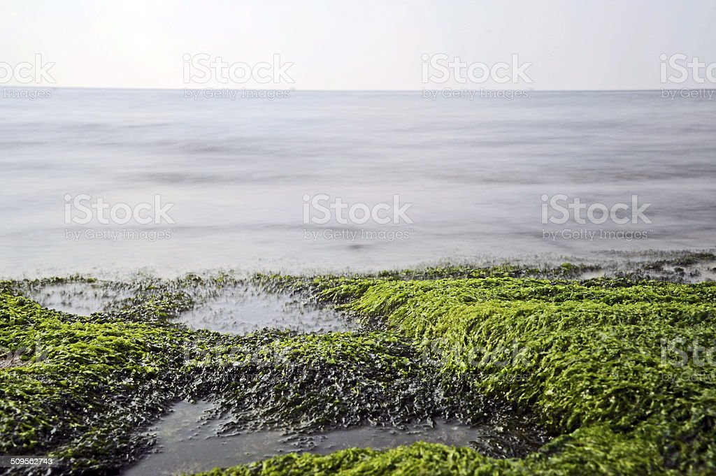 moss and sea stock photo