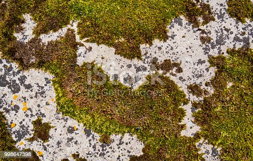 A stone slab partially covered by green and brown moss giving an interesting camouflage type background.