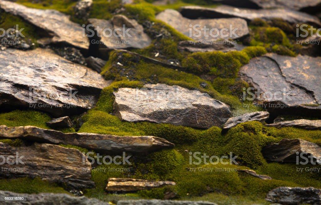 Moss and Stone royalty free stockfoto