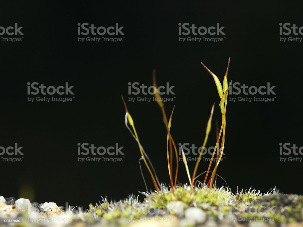 Moss and water landscape 4 stock photo