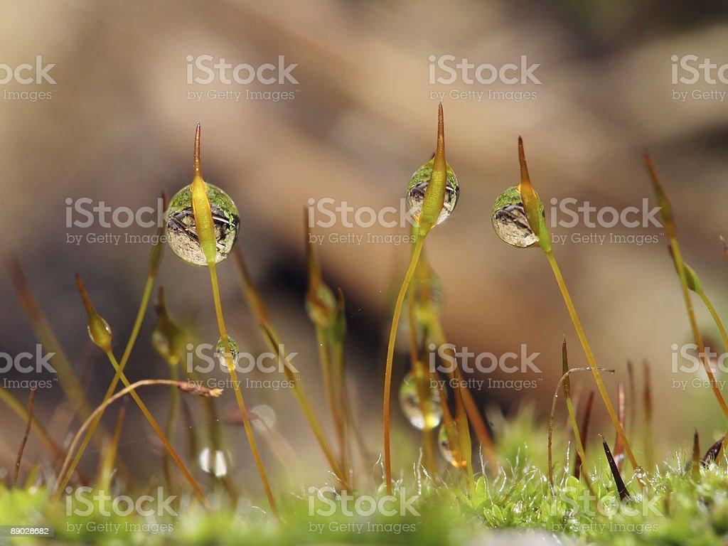 Moss et paysages d'eau 7 photo libre de droits