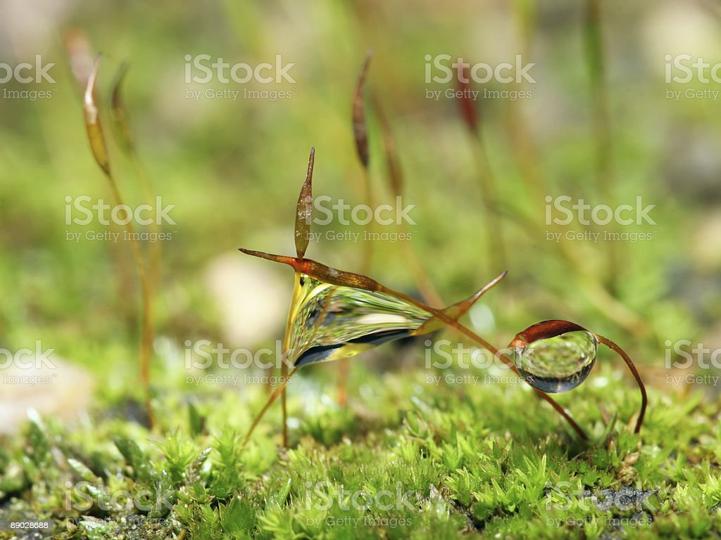 Moss and water landscape 8 royalty-free stock photo