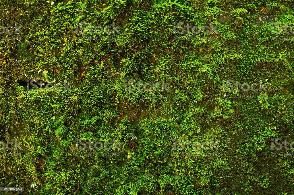 Moss at wall stock photo