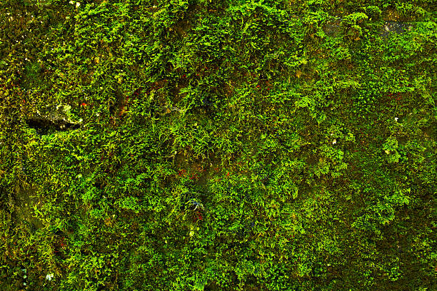 Moss at wall - foto de stock