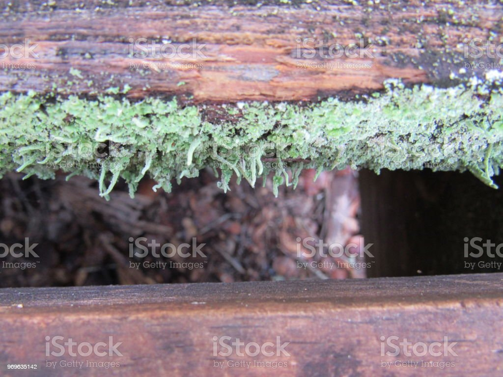 Moss between planks stock photo