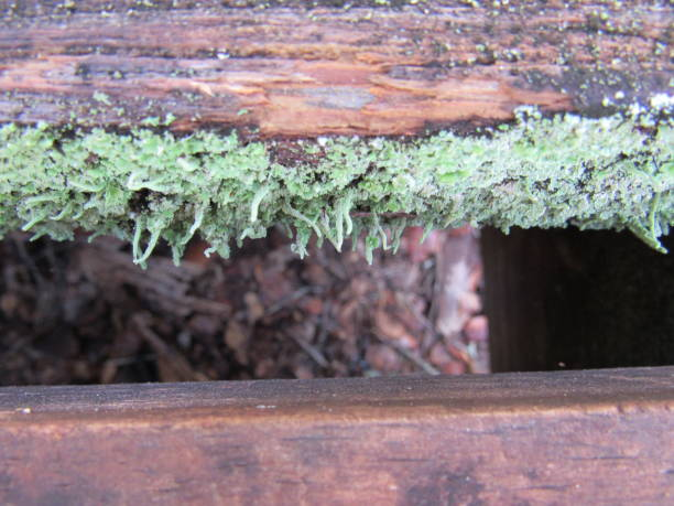 Moss between planks stock photo
