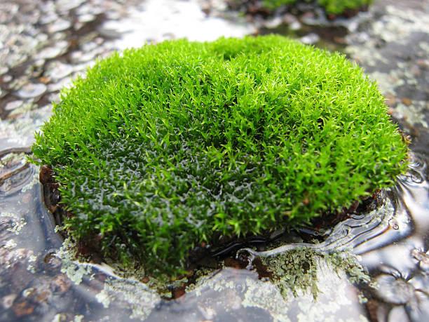 moss close up - fsachs78 stockfoto's en -beelden