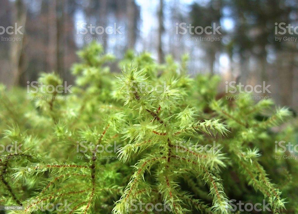 moss closeup royalty-free stock photo