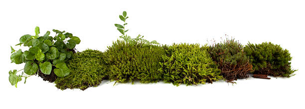 Moss collection Moss collection on a white background moss stock pictures, royalty-free photos & images