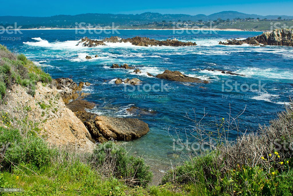 Moss Cove stock photo