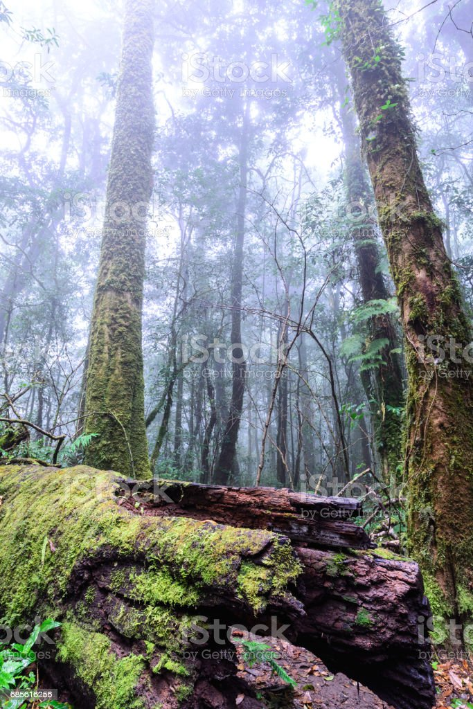 Moss cover on old stump in rainforest. royalty-free stock photo