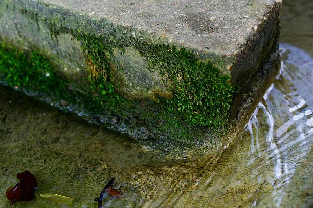 moos bedeckt backstein in einem creek - jake*s stock-fotos und bilder