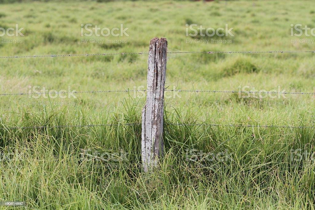 Moss mit Zaun post im grünen Bereich. – Foto