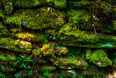 istock Moss Covered Rock Wall - Background 1250579266