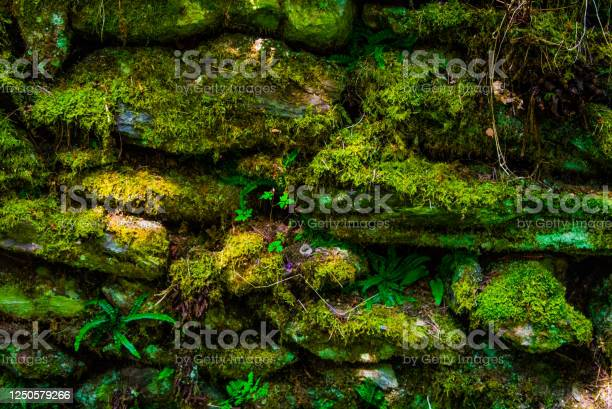 Photo of Moss Covered Rock Wall - Background