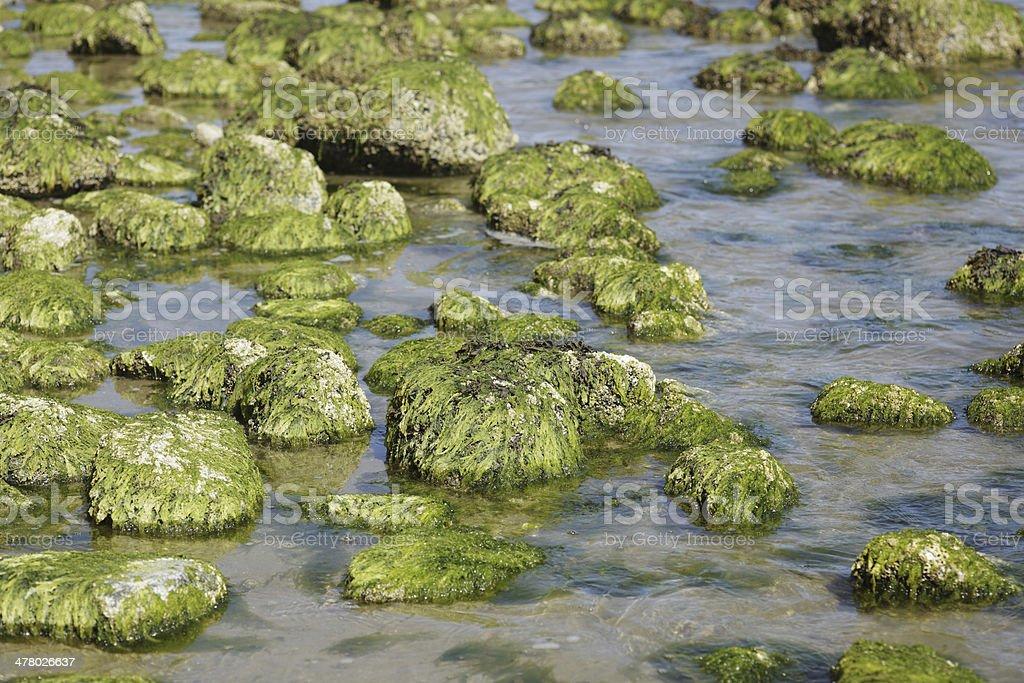Moss covered rocks along the Sunshine Coast, BC, Canada royalty-free stock photo