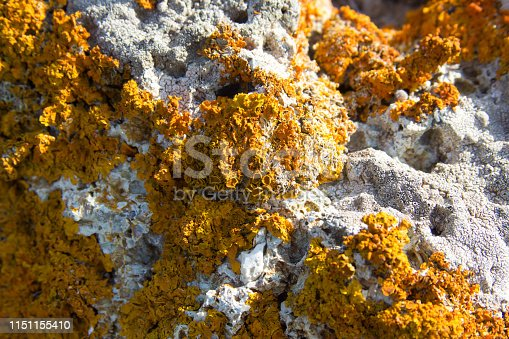 istock moss covered stone background on cover 1151155410