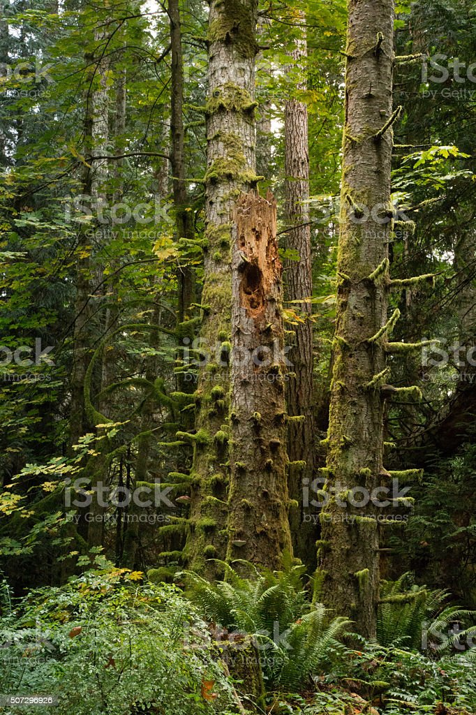 Moss Covered Stubby Tree Branches in forest stock photo