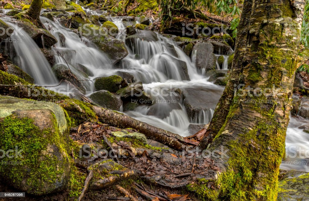 Moss Covered Tree and Stream stock photo