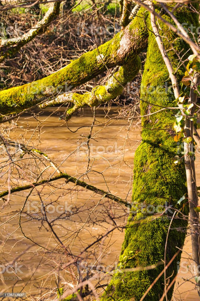 Moss covered tree stock photo