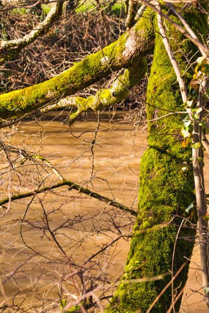 Moss covered tree stock photo