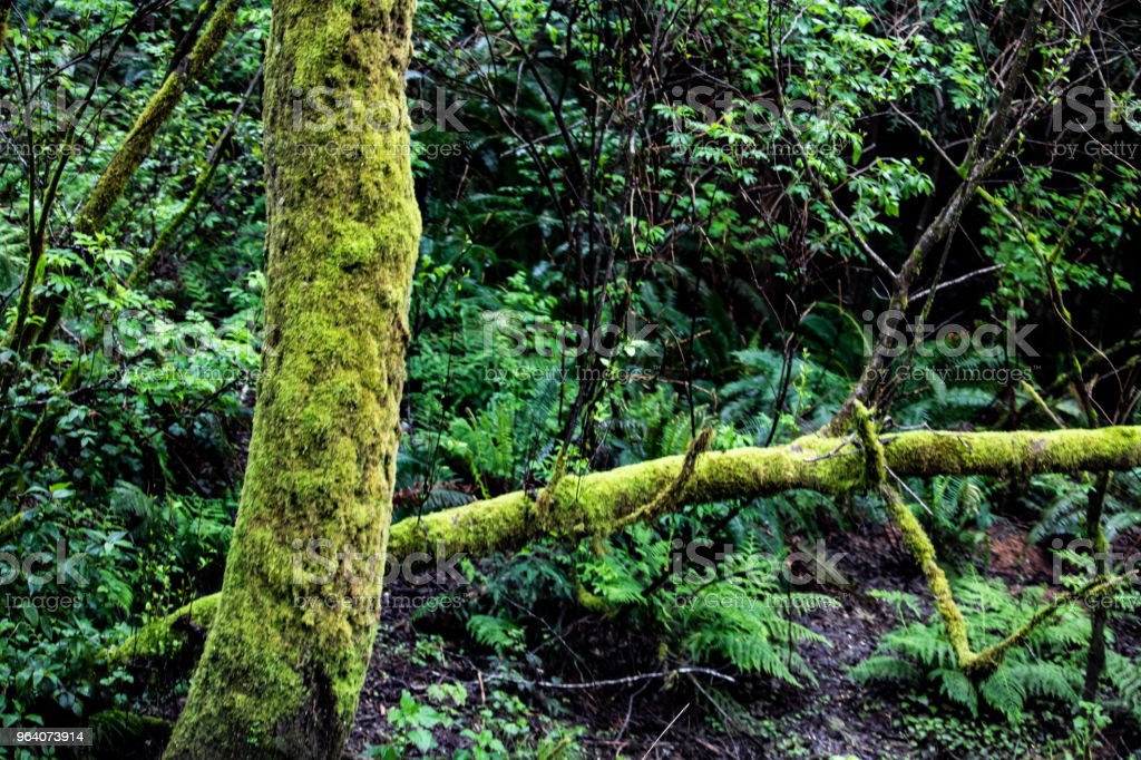 Moss Covered Tree - Royalty-free Beauty In Nature Stock Photo