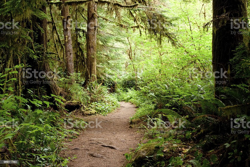 Moss covered tree trunks along the trail royalty-free stock photo