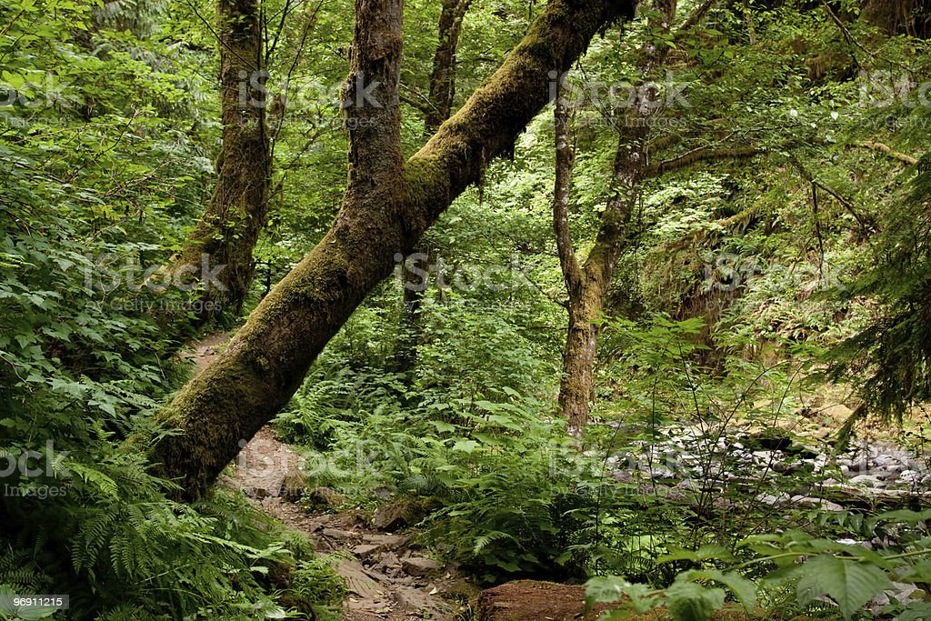 Moss covered trees along trail royalty-free stock photo