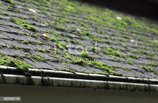Moss growing on a shingled roof