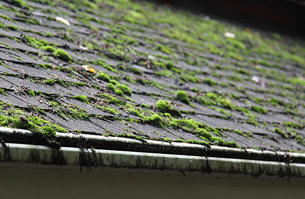 Moss covering a shingled roof stock photo