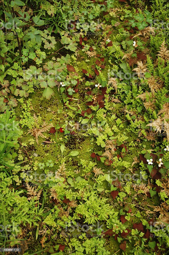 moss field stock photo