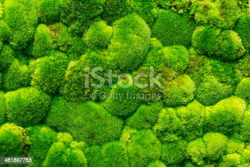 Beautiful Green Moss In The Forest, Background