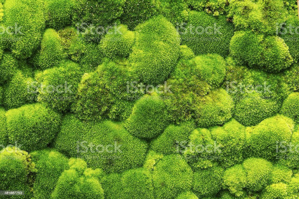 Moss Forest stock photo